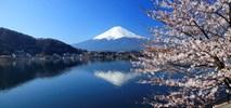 Air France celebrują Hanami – japońskie Święto Kwitnącej Wiśni