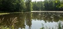 PLL LOT wspierają odbudowę siedlisk żurawia w Polsce