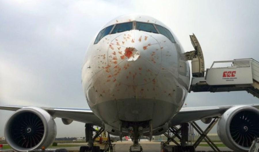 Boeing 777F linii Turkish Cargo lądował awaryjnie po kolizji z ptakami
