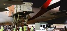 Emirates przewiozą z Liege do Tokio 247 koni na igrzyska