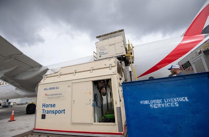 Emirates SkyCargo przewiozły konie sportowe do Dubaju