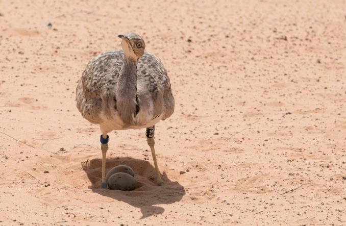 Emirates pomaga chronić dziką przyrodę i wrażliwe ekosystemy