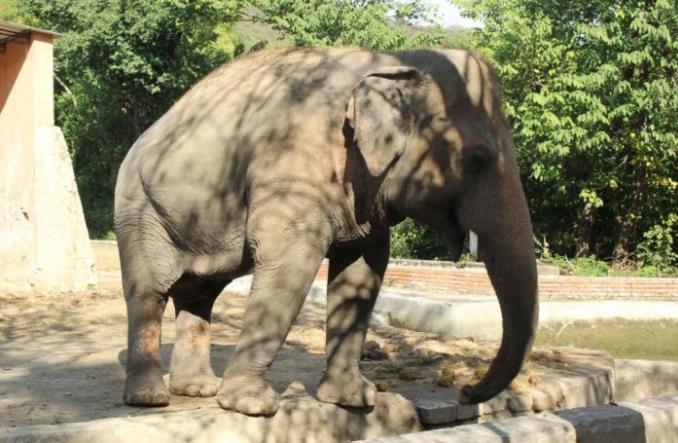 Z pomocą DHL najbardziej samotny słoń świata trafił do nowego domu [Zdjęcia]